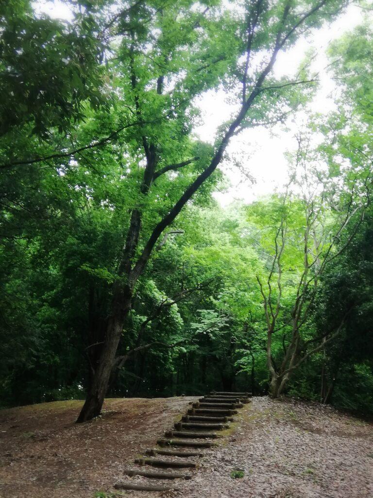 流山市立森の図書館の前の森