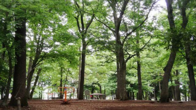 流山市立森の図書館の前の森と公園